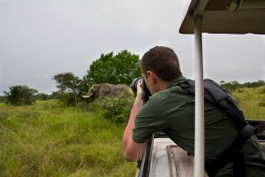 Capturing a shot of an African Savannah Elephant in Queen Elizabeth National Park - Uganda